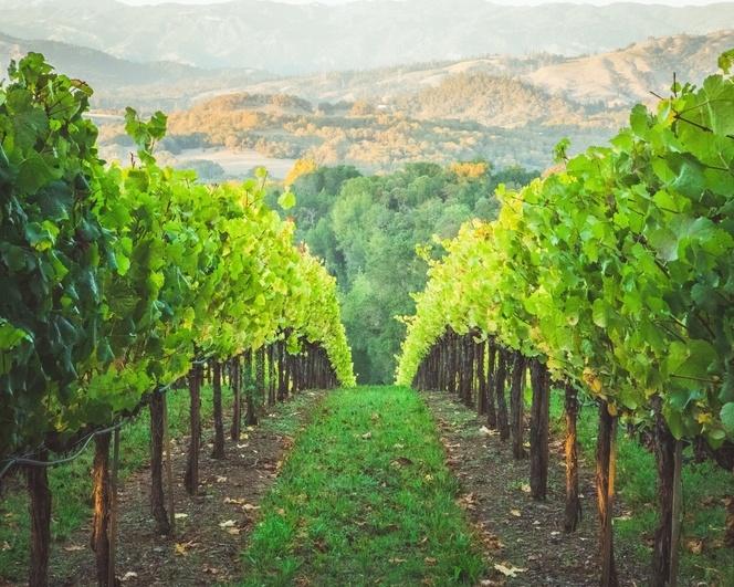 модернизираното вино