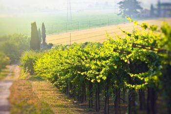 география на виното: бордо
