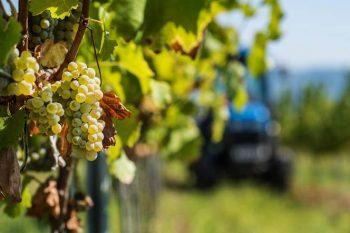 винопроизводители